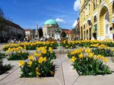 Hungary has a university since 1367, which is their oldest university – the University of Pecs